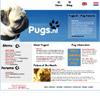 Pugs - Old dog breed